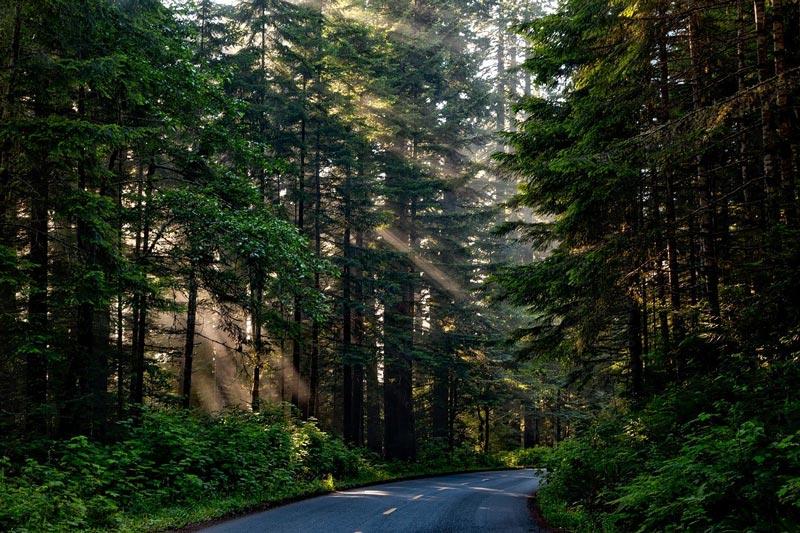 La importancia del impacto ambiental en la conservación de carreteras